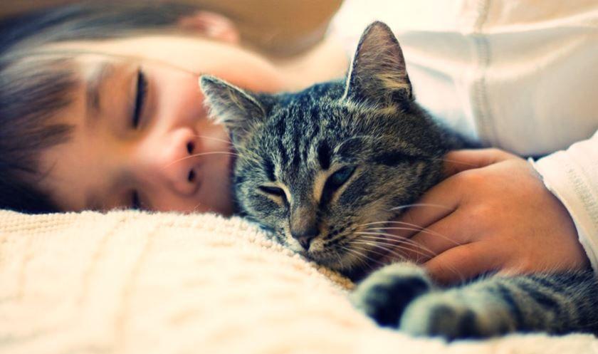 Relación entre gatos, alergia y enfermedades de la piel en humanos