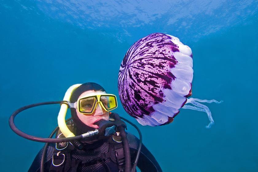 Prevención de picaduras de medusas.