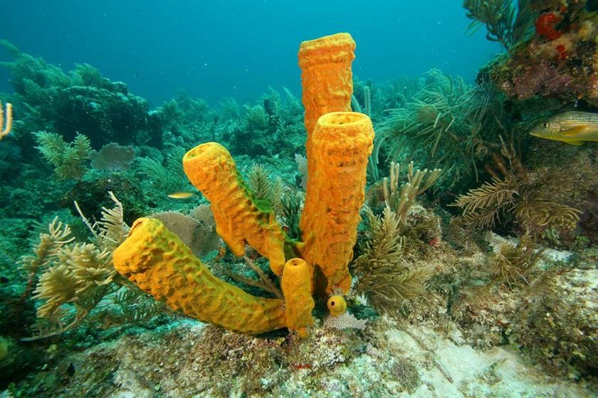 Esponjas de mar - Picaduras de animales marinos