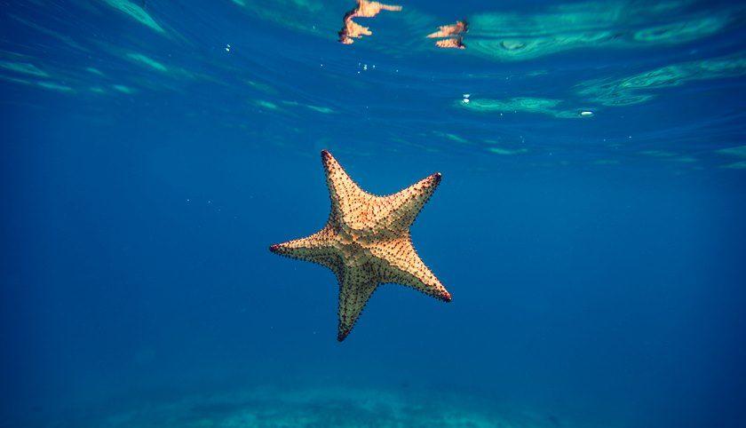 Picaduras de animales marinos: síntomas y tratamiento